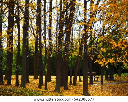 The colorful and beautiful autumn view in the park