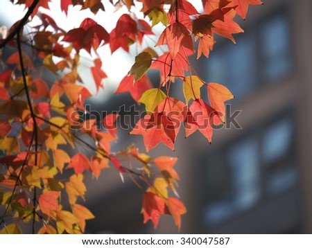 The colorful and beautiful leaves in autumn sunny day