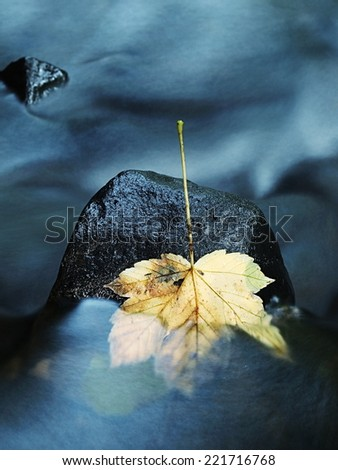 The colorful broken maple leaf  fallen on sunken basalt stone in blurred water of mountain stream. Fall weather. - stock photo
