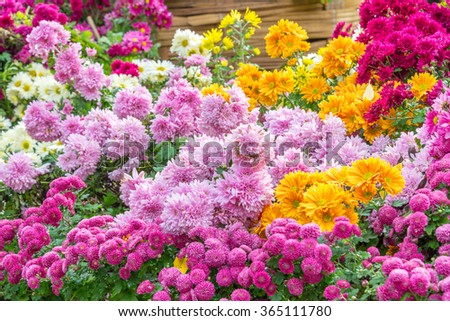 the colorful Flowers -Background with the Flowers - stock photo