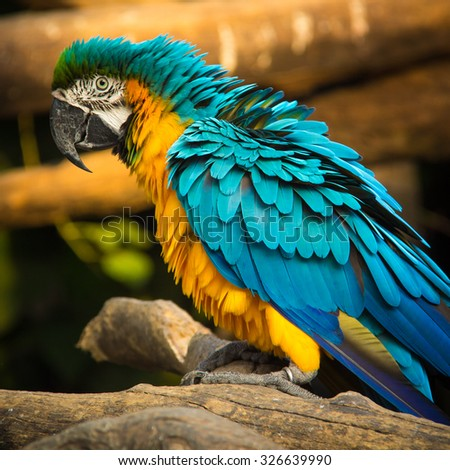 The colorful of macaws in the zoo - stock photo