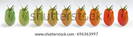 The colour stages of a plum tomato ripening, demonstrated with 9 images in a row