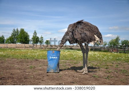 the comic image of the ostrich that hiding its head in a barrel with the