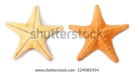 The Common Caribbean starfish (Oreaster reticulatus) isolated on a white background. - stock photo