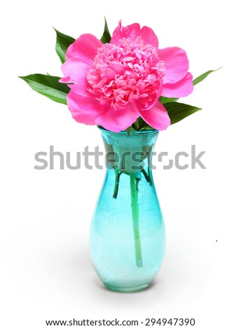 The Common Peony (Paeonia officinalis) is used in convulsions and spasmodic nervous affections, such as epilepsy, etc. Traditional herbal medicine. - stock photo