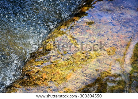 The complex ecosystem of sponges on the rock in a stream. - stock photo
