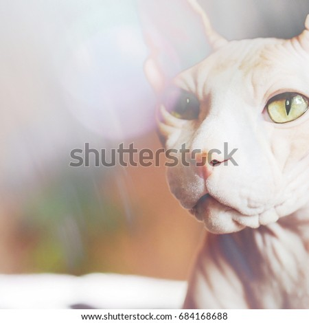 The complex mixed image of a cat of the Canadian Sphinx breed and decorative glass.