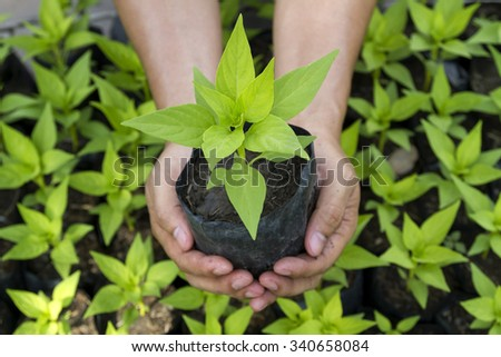 The concept helps conserve energy in global warming. By promoting awareness of growing trees, seedlings with extended features, Light shining from the sun - stock photo