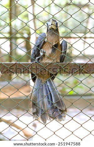 The concept of freedom depletion Helpless and imprisoned However, the bird is caught and imprisoned in a cage - stock photo