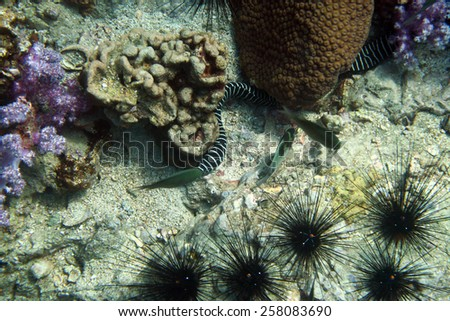 the coral reef of Anemone Reef, Thailand - stock photo