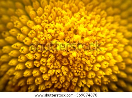 the core of a yellow flower - stock photo