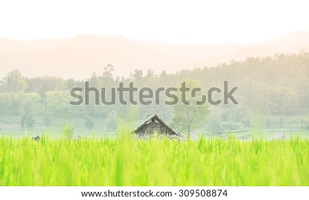 The cottages at the end of the green rice fields,This picture focuses on the presentation in a format of soft tones color  and blurry background consisting of related information - stock photo