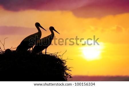 The couple of storks in the nest. Against the backdrop of the sunset. - stock photo