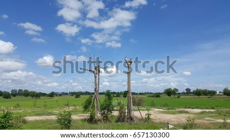 The couple of trees in the courtyard and bright sky