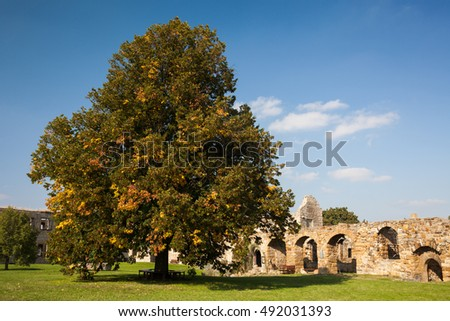 the courtyard of the ruins Burg Gleichen, Thuringia, Germany, with the big linden tree in the castle yard