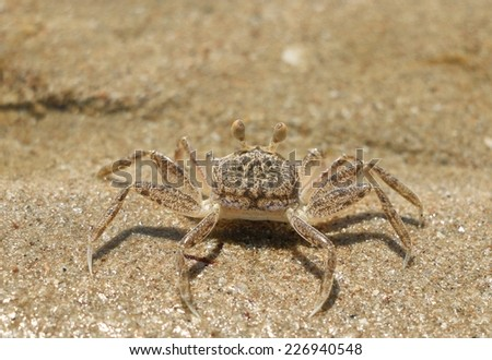 The Crab on the beach in Thailand