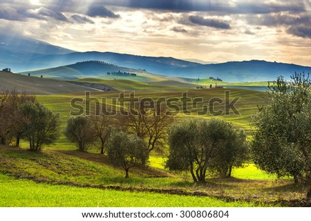 The cultivation of olive trees and spring landscape - stock photo