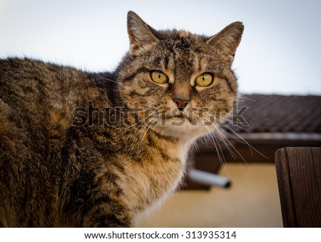 The curiosity cat looking at the camera, Prague, Czech Republic - stock photo