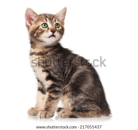 The curious cute kitten isolated on white background
