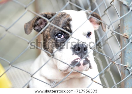 The curious dog in the cage
