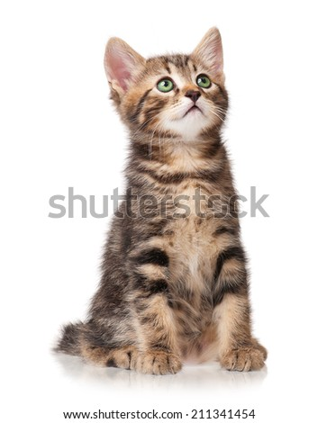 The curious kitten looks up isolated on white background - stock photo