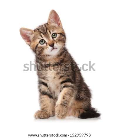 The curious kitten sits, having raised a forward pad isolated on white background