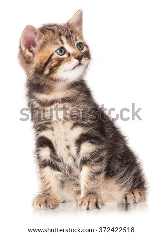 The curious little kitten isolated on white background