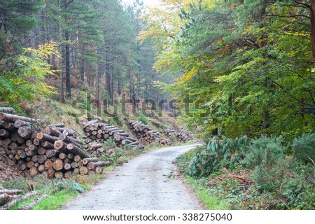 The cut and chopped fire wood are stacked in a heap - stock photo
