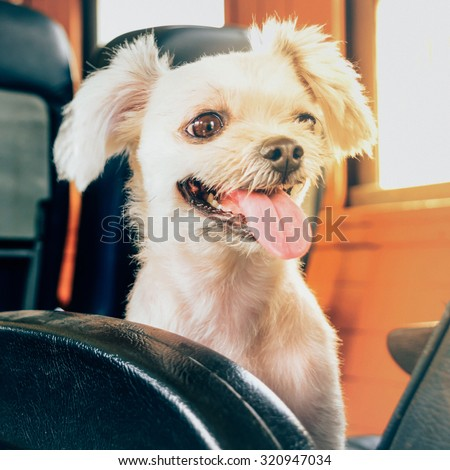 The cute Dog on the train , process in vintage style