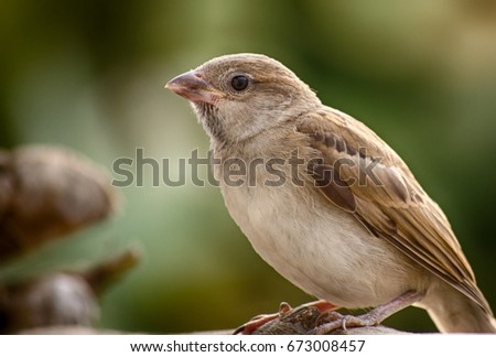 The Cute Sparrow