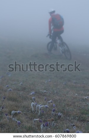 the cyclist, fog, flowers