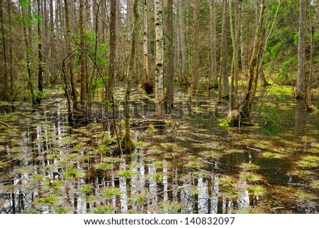 The cypress trees, knees, and swamp of Congaree National Park in South Carolina.