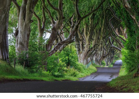 The Dark Hedge is romantic, atmospheric, tunnel-like avenue of intertwined beech trees, planted in the 18th-century.
