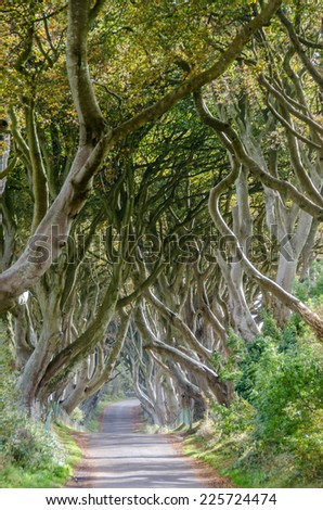 The dark hedges, Northern Ireland - stock photo