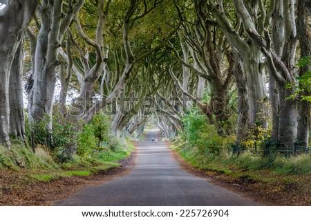 The dark hedges,Northern Ireland - stock photo