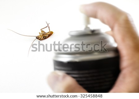 The dead cockroach, Killed  by pest control with black  spray  in hand - stock photo