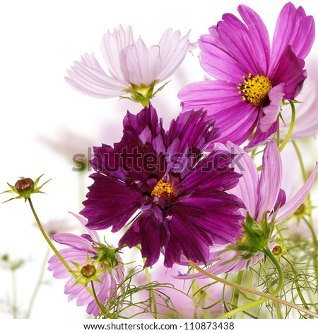 The decorative flower border - stock photo