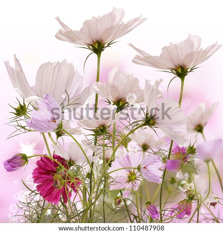 The decorative flowers.Flora - stock photo