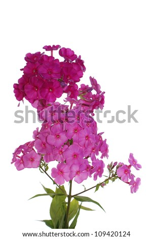 The decorative garden summer flowers over white background