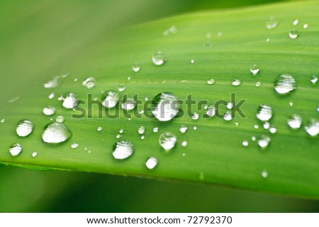 The Dew on leaf in morning - stock photo