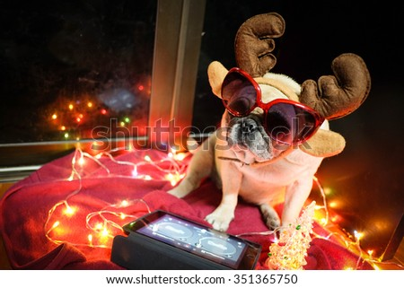 The DJ pug dog playing turntable program in chris-mas party. - stock photo
