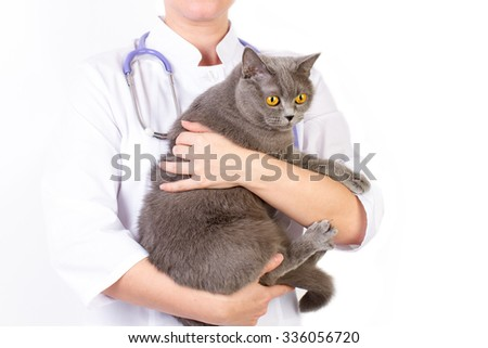 The doctor white coat with stetoscope holding a cat - stock photo