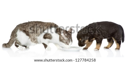 the dog and cat eat together. isolated on white background - stock photo