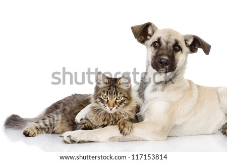 the dog and cat embrace and looking at camera. isolated on white background - stock photo