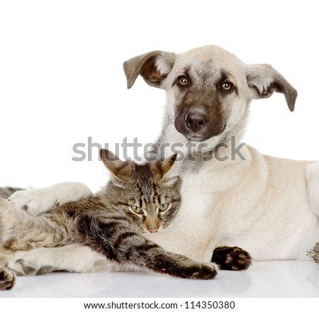 the dog and cat embrace. isolated on white background - stock photo