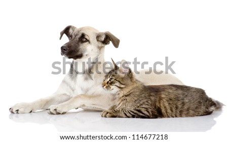 the dog and cat lie nearby. isolated on white background - stock photo