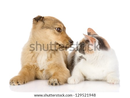 the dog and cat look at each other. isolated on white background
