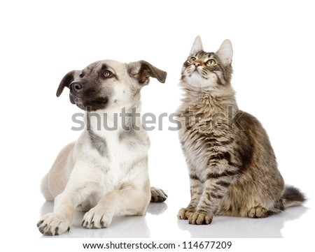 the dog and cat look up. isolated on white background