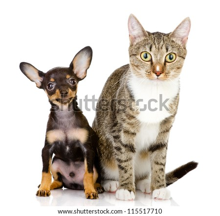 the dog and cat watchfully look in the camera. isolated on white background - stock photo