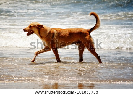 The Dog at the beach as beach theme